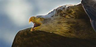 My winning photo of the Sea Eagle.